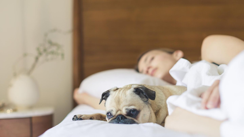 Mit dem Hund in einem Bett schlafen? Es gibt jede Menge Gründe dafür