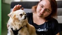 Deutschlands kleinster Therapiehund kann Tränenflüssigkeit wittern