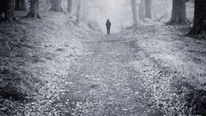 Person auf einem nebligen Waldweg