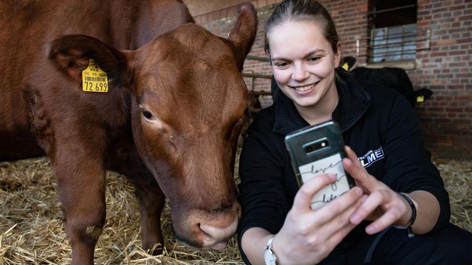 Influencerin mit Smartphone neben ihrem Angus-Rind