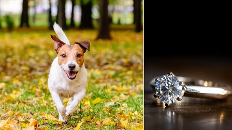 Ein Krankenhaus musste den Hund von dem Ringe befreien (Symboldbild).