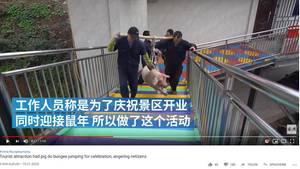 Schwein in China muss Bungee springen