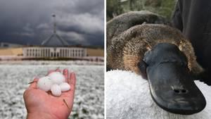 Australien leidet unter dem extremen Wetter