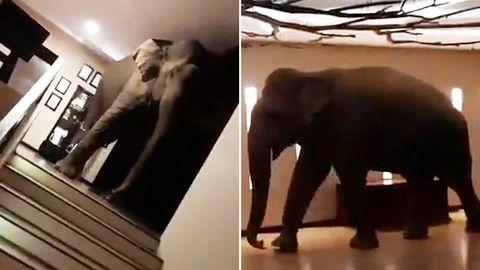 Ein Elefant flaniert ganz gemächlich durch die Empfangshalle eines Hotels in Sri Lanka.