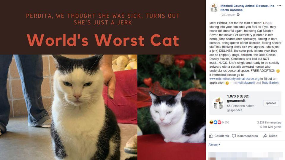 Ein Screenshot des Facebook-Posts, in dem Perdita beschrieben wird
