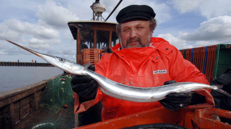 Ein Hornhecht in den Händen eines Fischers