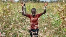 Kenia, Katitika: Der Sohn eines Bauern versucht einen Schwarm Wüstenheuschrecken von einem Feld zu vertreiben