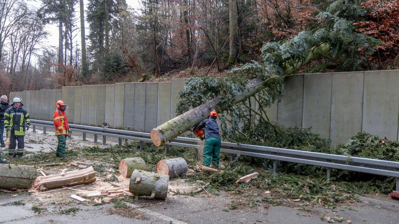 Stürmisches Wetter: Einsatzkräfte räumen einen Baum von einer Straße, der nach stärkerem Wind umgefallen war