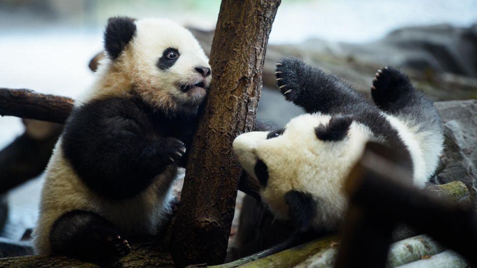 Pit und Paule verzaubern Besucher im Berliner Zoo