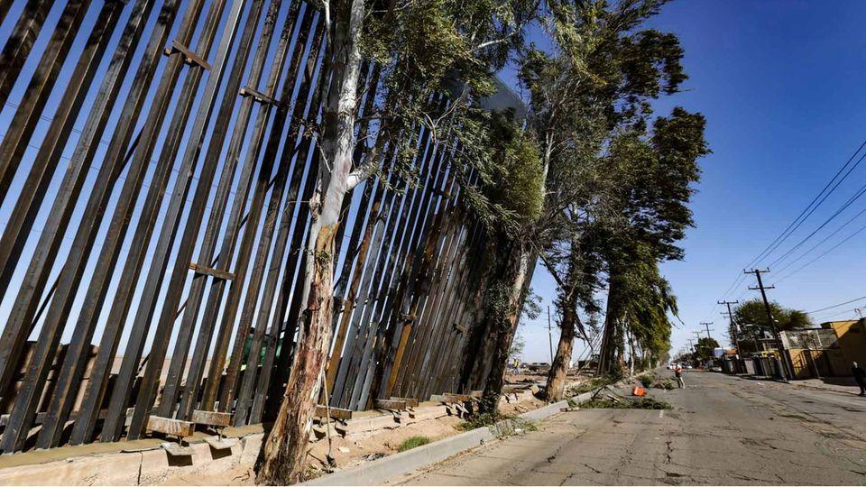 Bäume auf der mexikanischen Seite verhinderten, dass die Mauer komplett umkippte