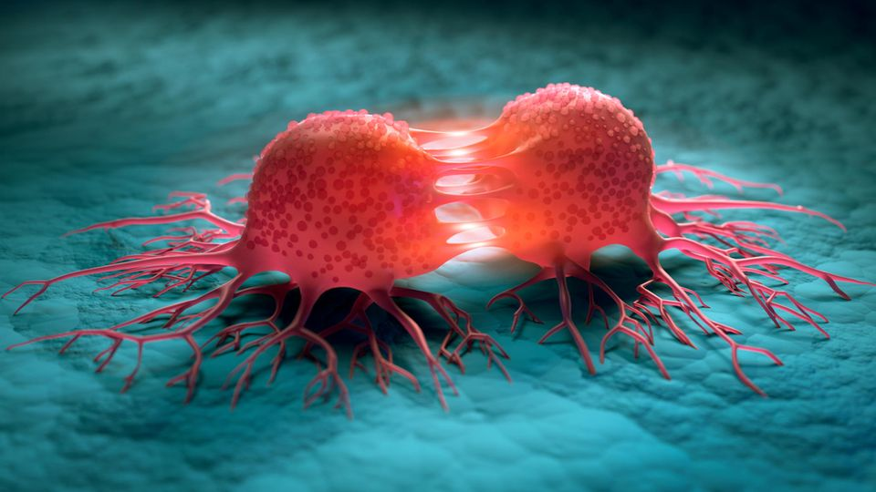 WHO Krebs: Krebszellen teilen sich