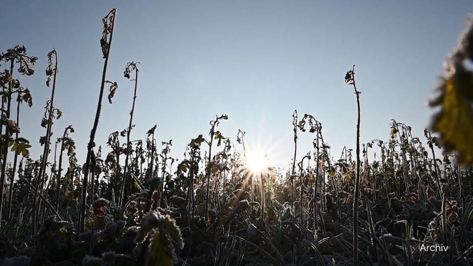 Der Januar 2020 war der wärmste seit Beginn der Wetteraufzeichnungen.