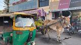 Auf den Straßen von Indien