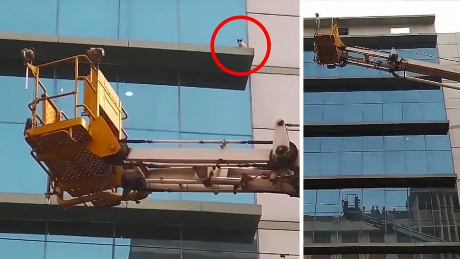 Mit Drehleiter: Katze wird von Feuerwehr aus dem sechsten Stock gerettet.