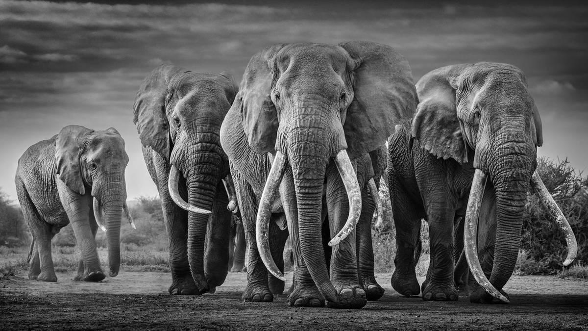 David Yarrow zeigt seine spektakulären Tierfotografien