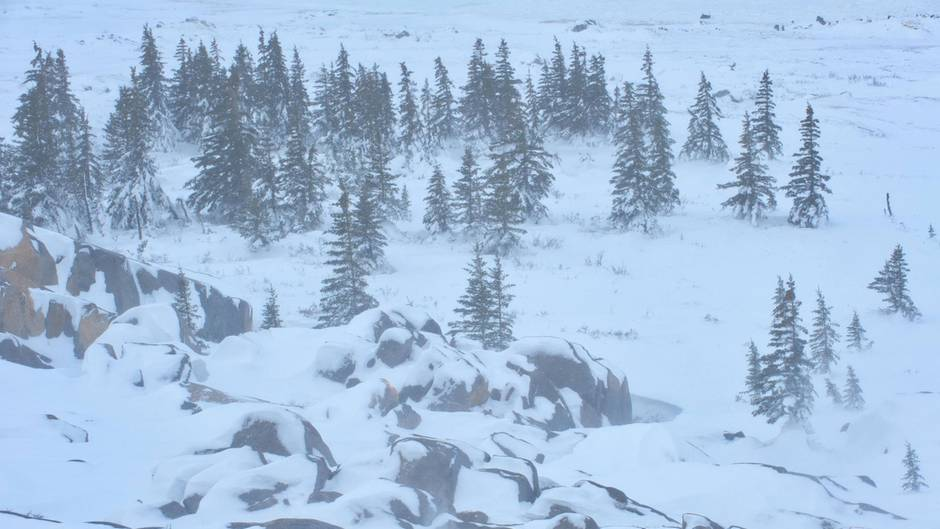 Winterliche Landschaft nahe Churchill, Manitoba
