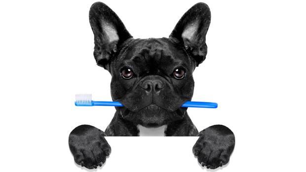 Es gibt auch Zahnbürsten für Hunde