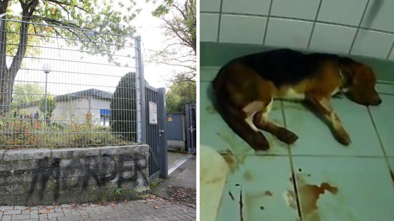 Tierversuchsanstalt LPT bei Hamburg; Hund