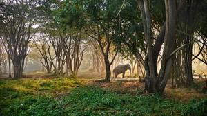 "Das ""Elephant Valley"""