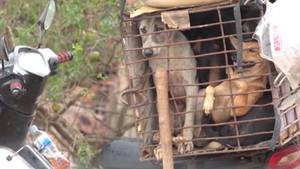 Hunde im Käfig