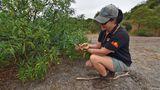 Emily kniet vor einem Strauch mit Kangaroo Apples