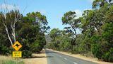 Einsame Straße durch Gumtree-Wälder