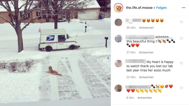 Ein Hund liegt im Schnee und wartet