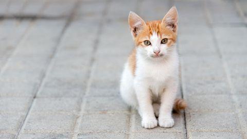 Eine kleine Katze sitzt auf der Straße