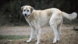 nachrichten deutschland - hund erstochen