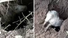 Links schaut ein Pony mit aufgerissenen Augen aus einem Erdloch empor, rechts springt aus ihm heraus