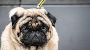 Rückrufe und Produktwarnungen: Fressnapf ruft Hundesnack zurück