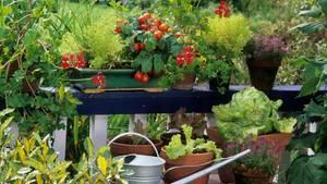 Ein Balkon voller Tomaten, Salat und Blumen