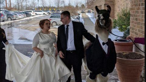 Lama mit Braut und Bräutigam