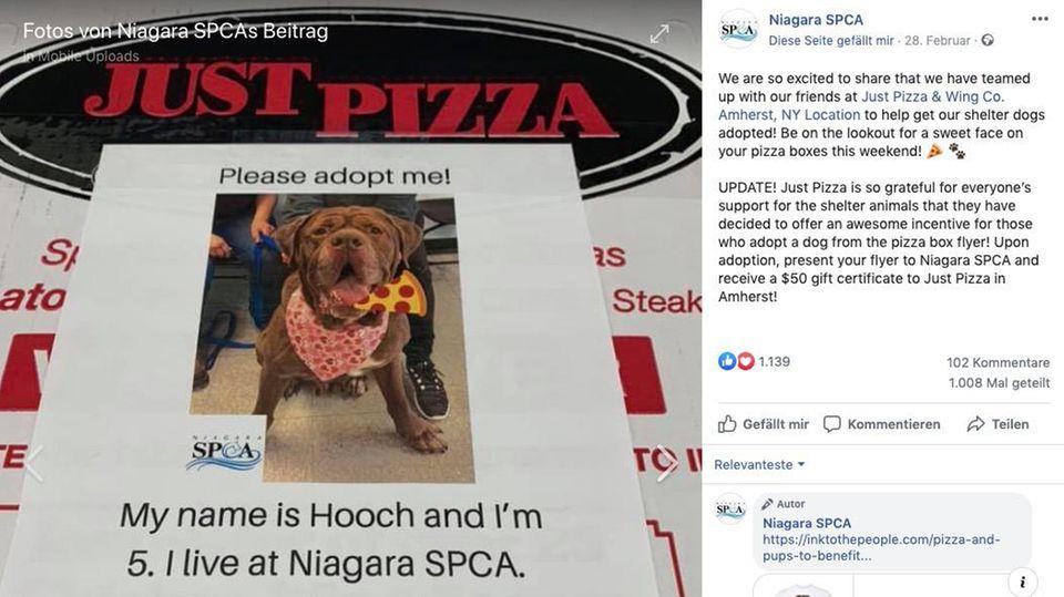 Hundefoto auf Pizzaschachtel
