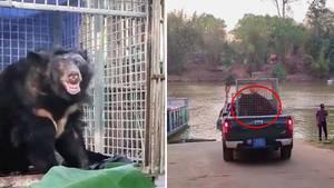 Südostasien: Das grausame Geschäft mit Bärengalle – 22 Jahre im Käfig gefangen