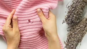 Motten fressen Löcher in Kleidung
