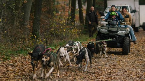 Sieben Hunde ziehen einen Quad