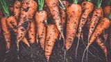 Karotten mit Erde