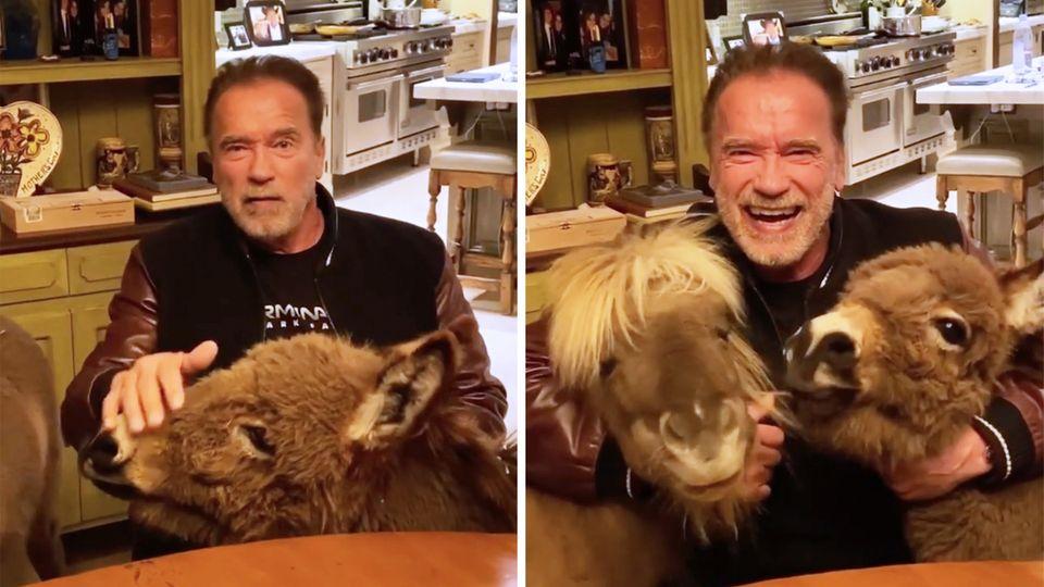 Arnold Schwarzenegger macht sich für Maßnahmen zur Eindämmung des Coronavirus stark.