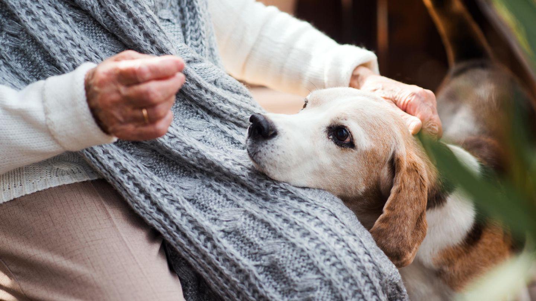 Eine Frau streichelt ihren Hund