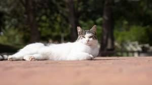 Eine Katze liegt auf dem Boden in der Sonne