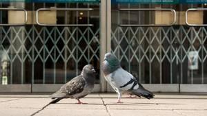 Tauben vor einem geschlossenen Kaufhaus