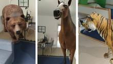 Google 3D-Tiere