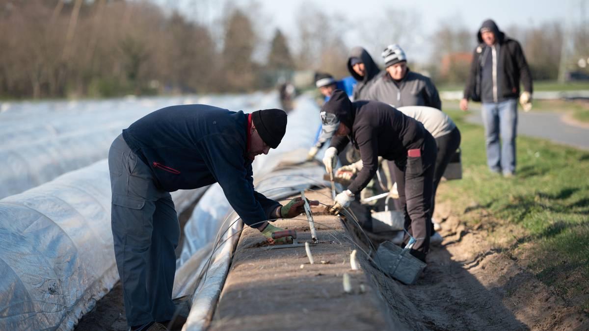 Erntehelfer gesucht: Lockerung des Arbeitsverbots für Asylbewerber gefordert