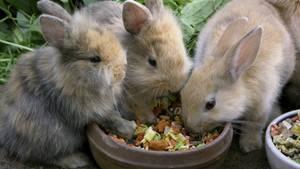 nachrichten deutschland - kaninchen