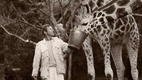 Peter Beard füttert Giraffen