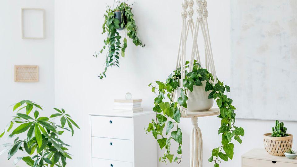 Die Makramee-Technik eignet sich für zahlreiche DIYs wie Wandteppiche oder Blumenampeln