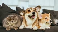 Coronavirus: Hunde und eine Katze sitzen auf einem Sofa