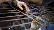Gefangene Hunde in China