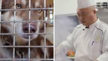 Die chinesische Stadt verbietet Verzehr von Hunden und Katzen.